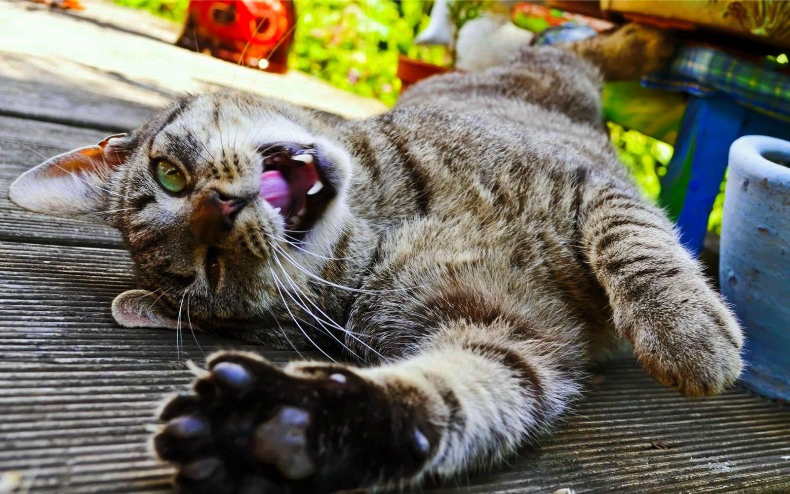Оксана, смешные котики приколы