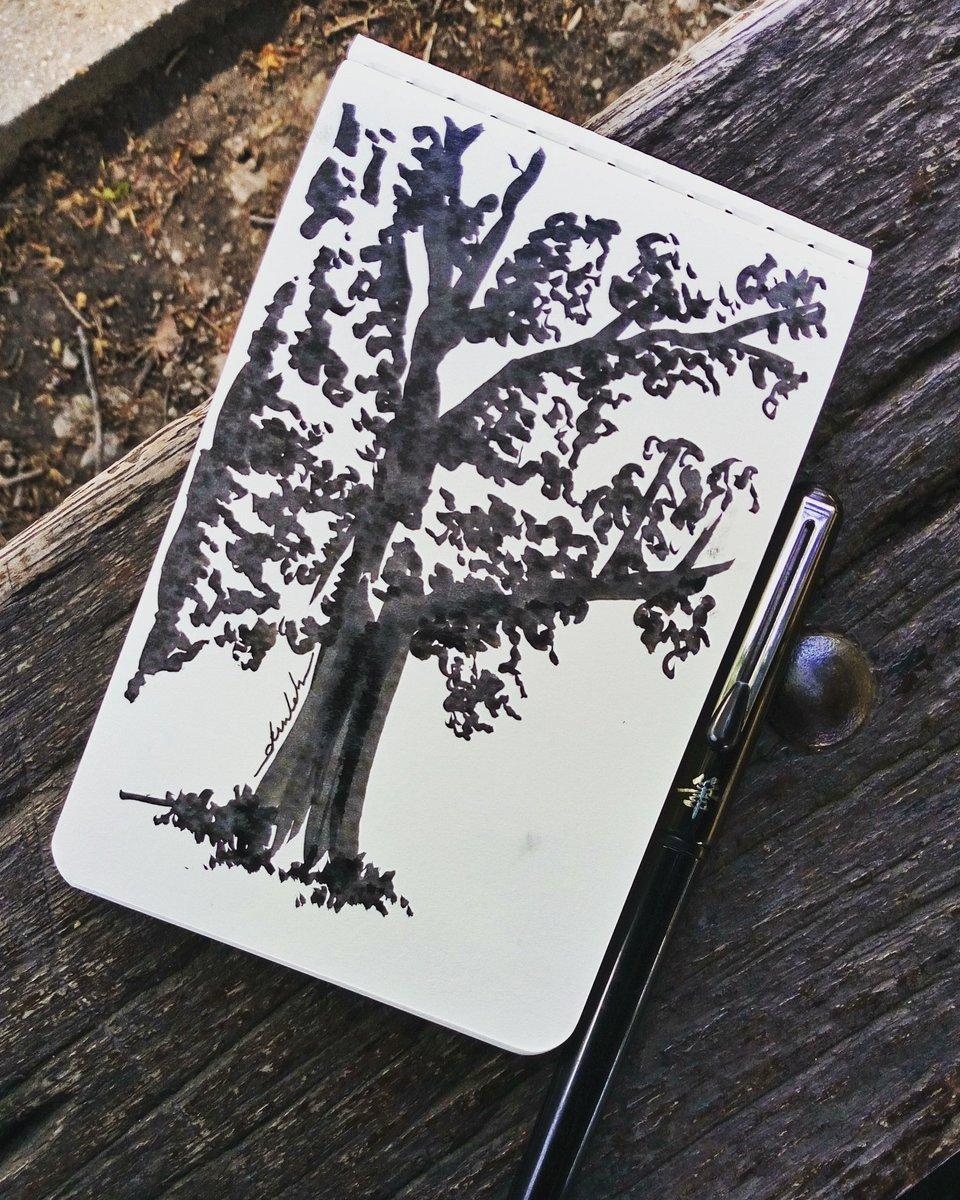 In the park #dailyart #dailyillustration #trees #park #drawinthepark #nature https://t.co/JlzfHm1dgD