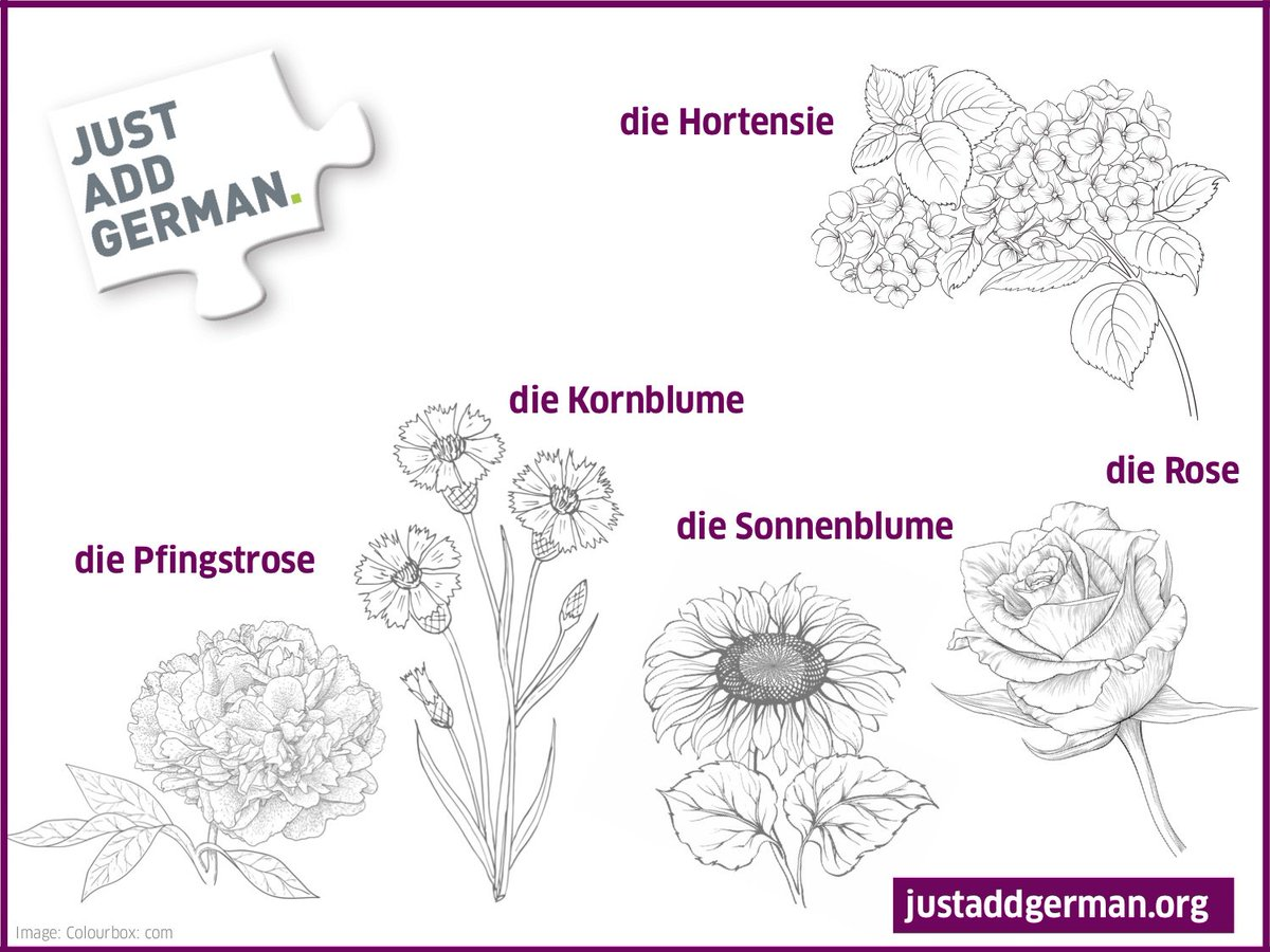 German A1 Vocabulary List Goethe
