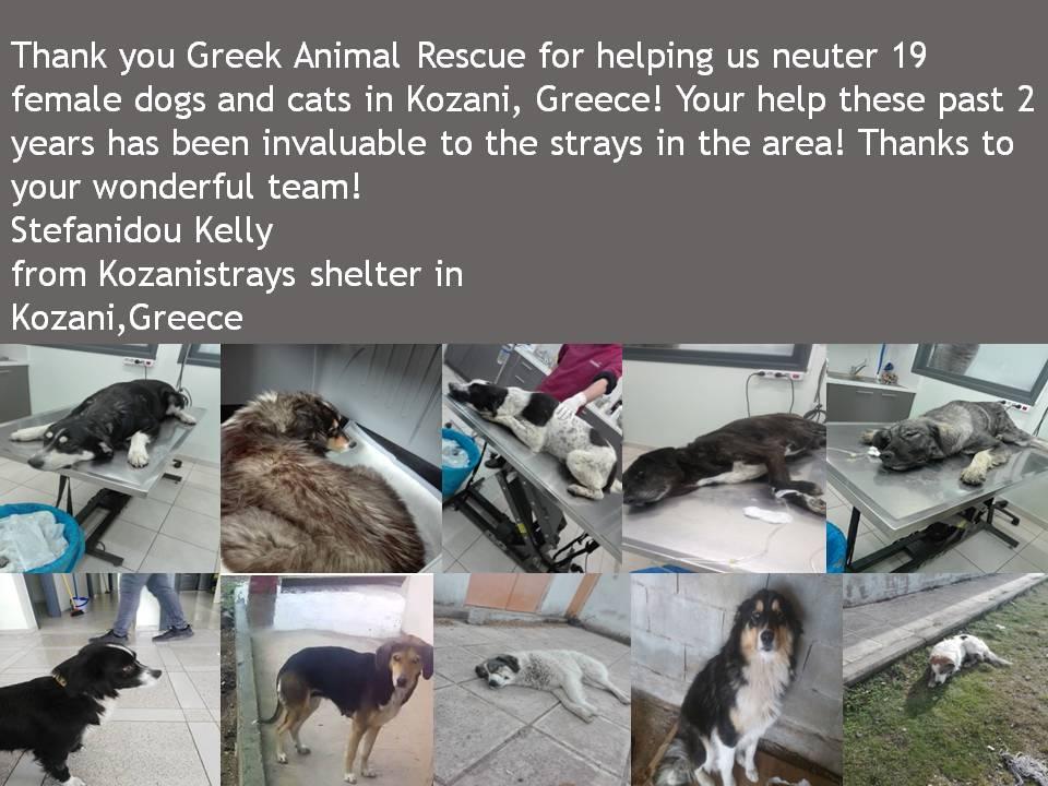 Greek Animal Rescue (@GARanimalrescue) | Twitter