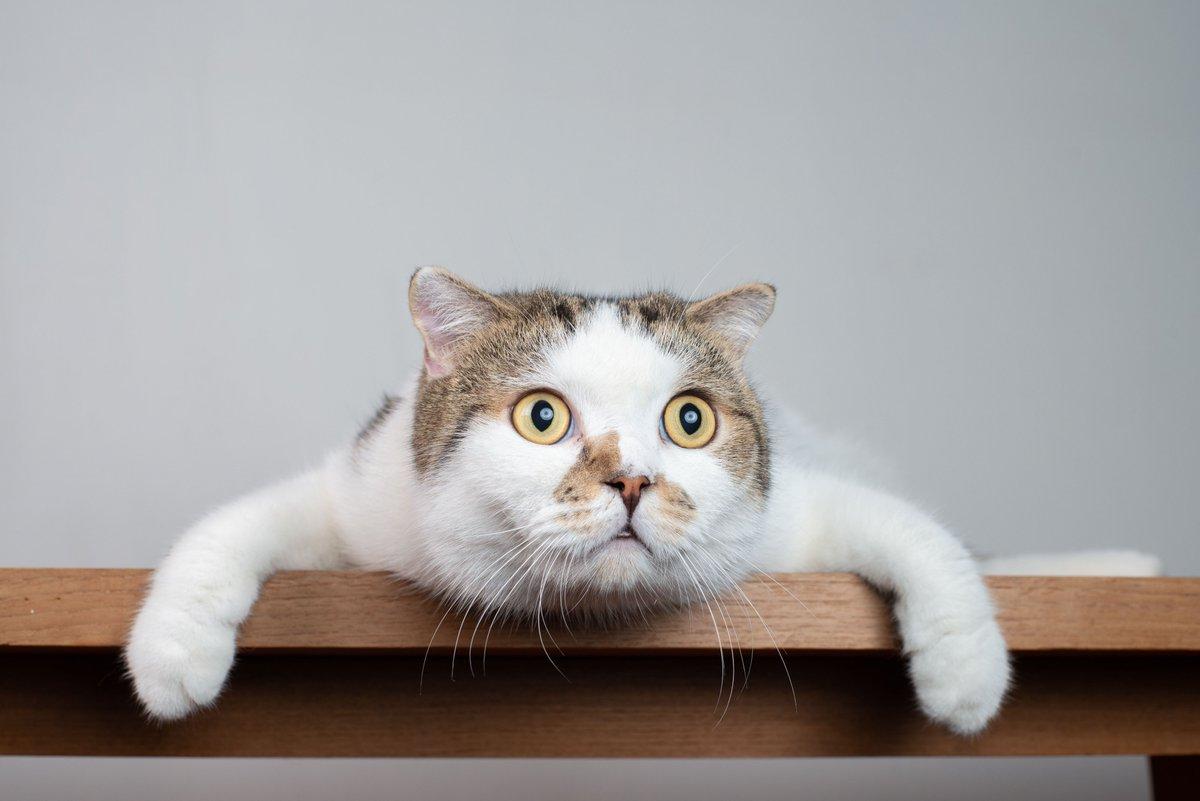 озадаченный кот картинки