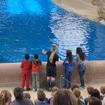 Image for the Tweet beginning: Enjoying the Seven Seas Dolphin