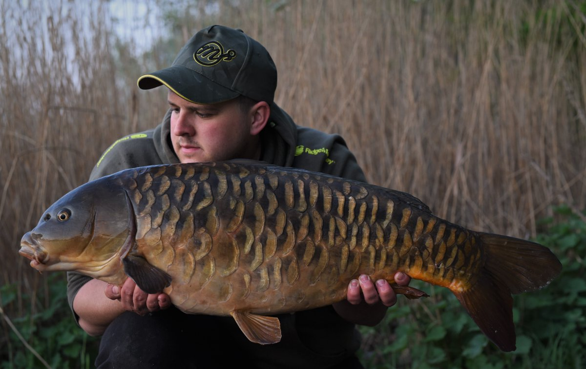 Chris Cox has been hitting the bank with his trusty Cell boilie approach with great results! #MainlineBaits <br>http://pic.twitter.com/7DN5mg7uEd