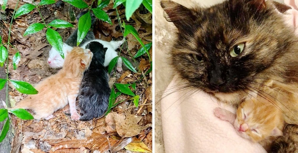 Stray cat shields her kittens from pouring rain until rescuers arrive. See full story and updates: lovemeow.com/cat-stray-shie…