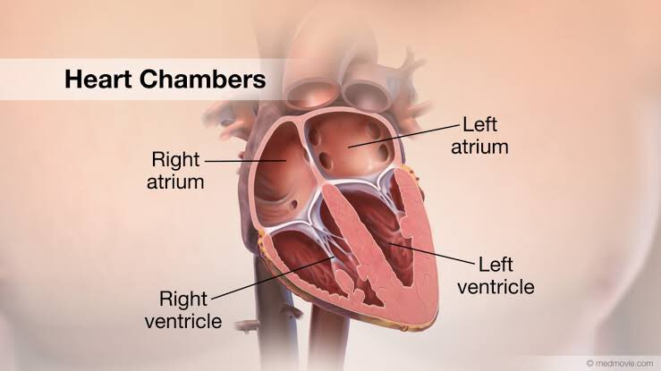 As you can see, heart has 4 chambers. One for each wife. Subhan'Allah