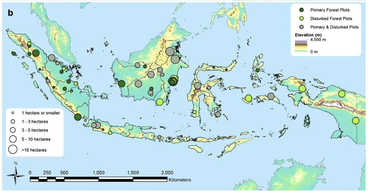 New paper introducing the Indonesian forest monitoring network 🌴🌲🌳🌱 https://tinyurl.com/y3ye4ccr  @KewScience @francisbrearley @alicia_ledo #NewGuinea @BES_Tropical @ESA_org @IUCNAsia @ForestPlots @dIPI_Indonesia @cmwbb @LainieQie