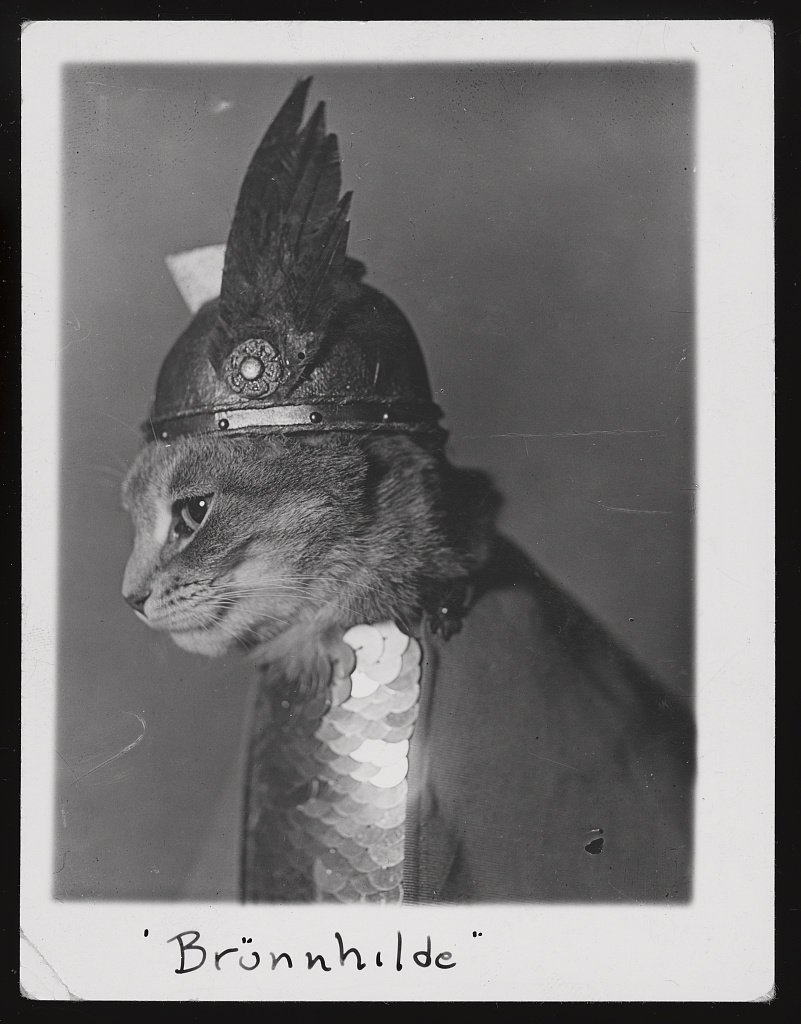 The Library of Congress has released a curated set of free-to-use cat images. 😺  https://www.loc.gov/free-to-use/cats …