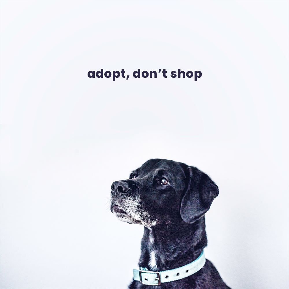 3-4 million dogs and cats are killed in the United States every year simply because there are not enough homes for them.   There&#39;s no reason to breed and buy. #AdoptDontShop <br>http://pic.twitter.com/PRGKXACF3m