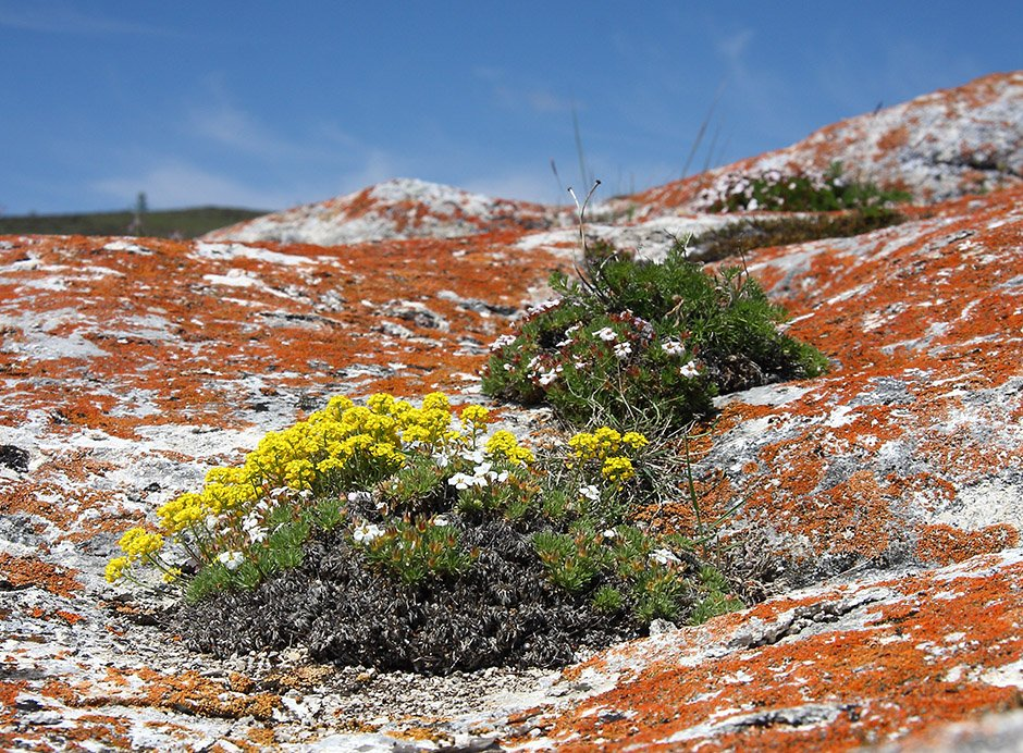 Тюльпаны фото желтые оранжевые красные беларуси удивительным