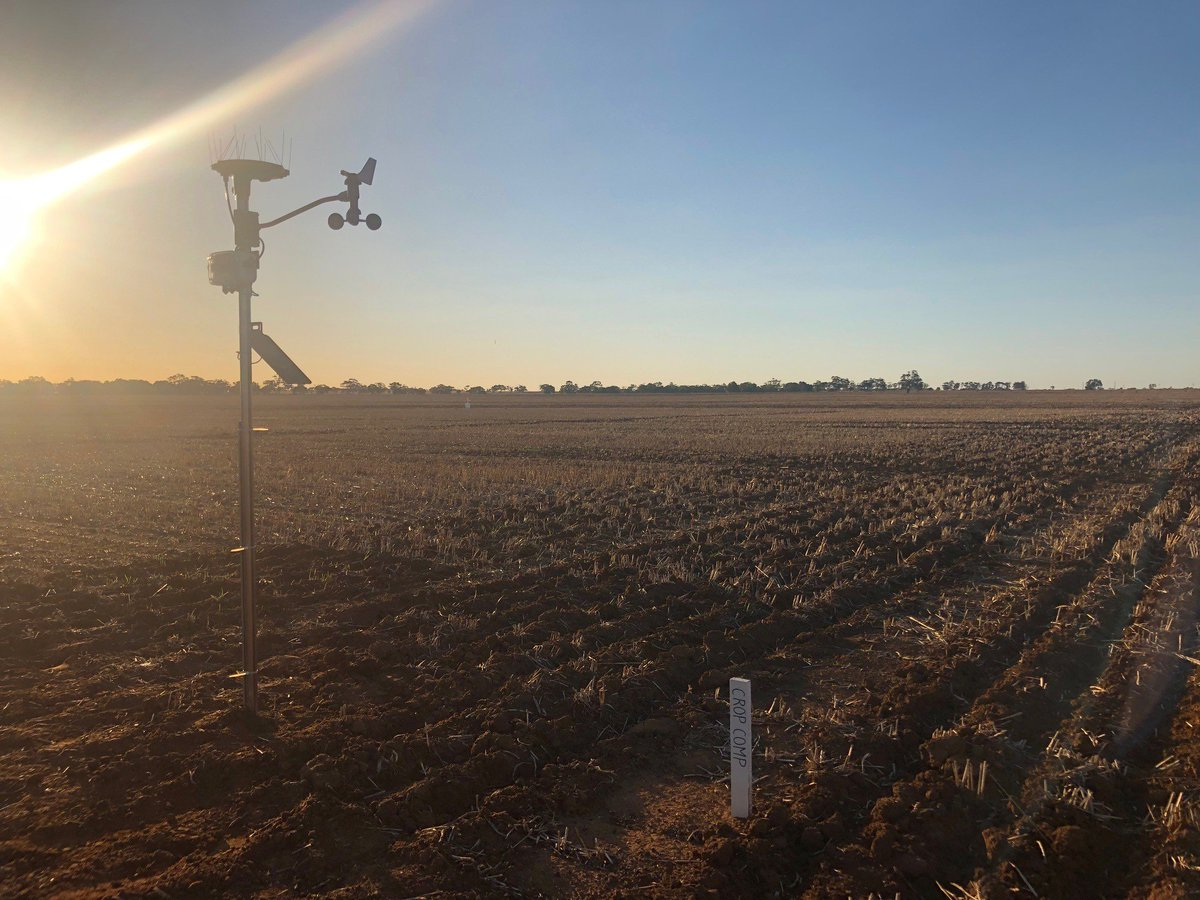 My how you've grown! 🌱 A view of the weather station (Arable Mark & Bridge, anemometer) gathering critical data for the @AgXtra & @SAGrainTrust crop competition. Field day is just over a month away, on 9 September. #agxtra #ausag w/ @D3Ag_au