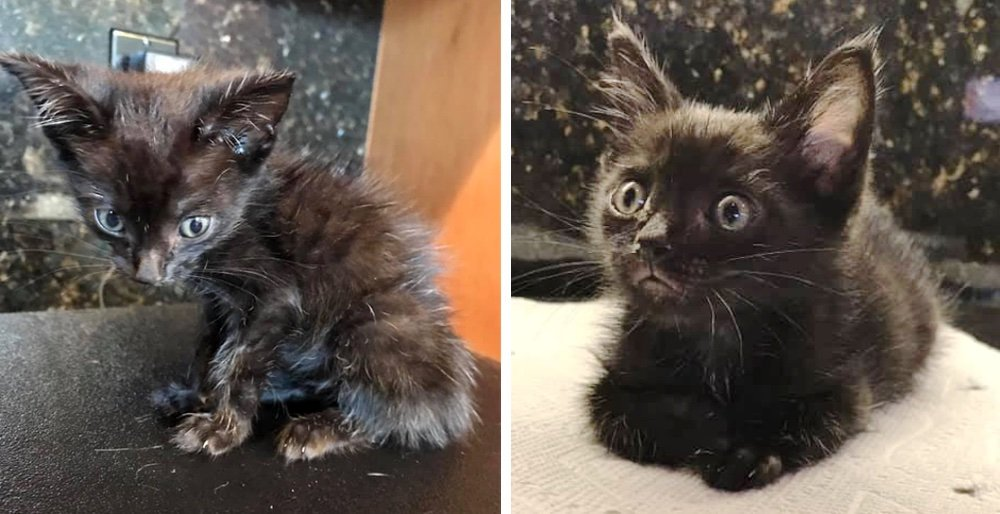Scrawny kitten found on the driveway is determined to live despite the rough beginning. See full story and updates: lovemeow.com/kitten-drivewa…