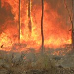 20 years of fire, research & partnerships -  the SEQ Fire & Biodiversity Consortium's annual forum on 11 June is proudly supported by @EcolSocAus Get your tickets here: https://t.co/KM4pKRVC05 @seqfbc #fire #bushfire #ecology #conservation #research #partnerships