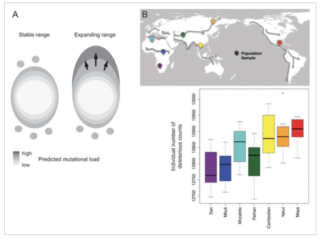 From Willi & Van Buskirk in @ASNAmNat : a practical guide to studying the many factors limiting the geographic distribution of species, ranging from dispersal limitation to developmental integration of traits. https://www.journals.uchicago.edu/doi/abs/10.1086/703172…