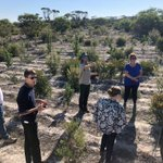 @SouthCoastNRM had the privilege to show off the great work planned/done in the #FitzStrilingLink to @AusLandcare reps from the Depts of Environment & Energy, Agriculture & Water yesterday. Tks to @FBG_Jerramungup and @BushHeritageWA for sharing their successes and challenges 1/3
