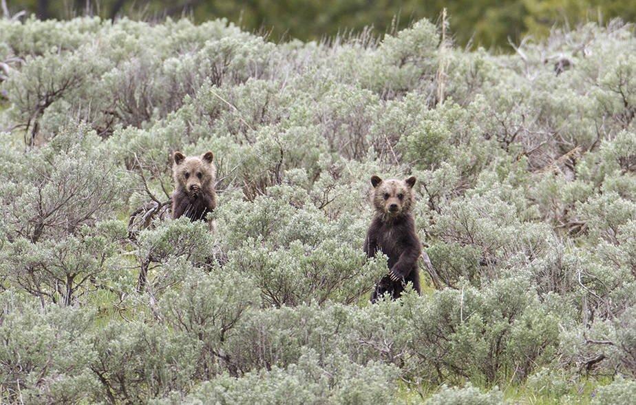 Svein T veitdal's photo on Grizzlies