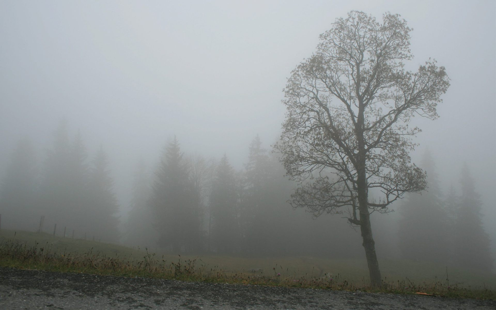 картинки сильного тумана особенностью