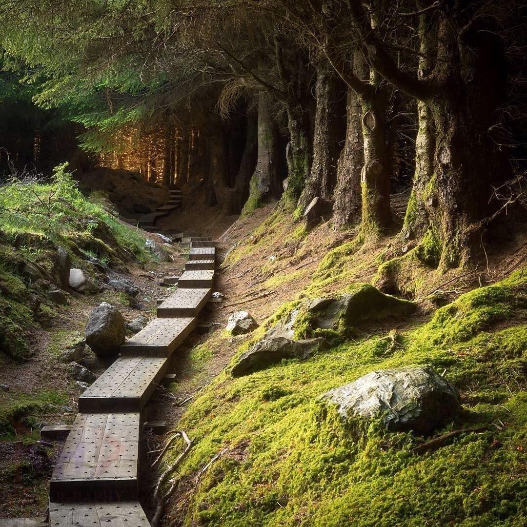 фото таинственный лес северная ирландия столкновениях погибло два