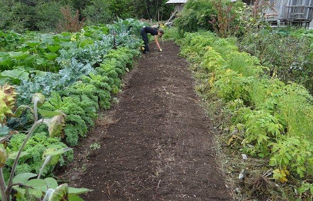 La necesaria agroecología http://opcions.org/es/consumo/agroecologia/…  Para que la agricultura ecológica perdure es necesario que todo el sistema alimentario sea coherente con la sostenibilidad ambiental, social y económica.