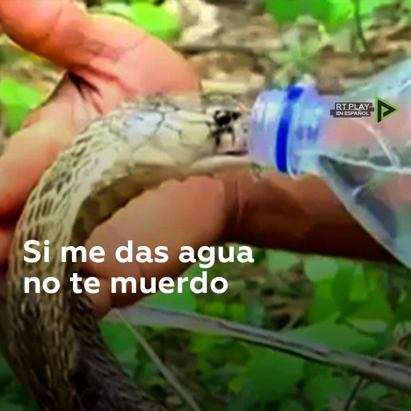 ¡Tengo sed!: Agente forestal da agua a una cobra y evita ser mordido. A pesar de que la serpiente no llegó a atacar al hombre, la tensión se palpa en el ambiente