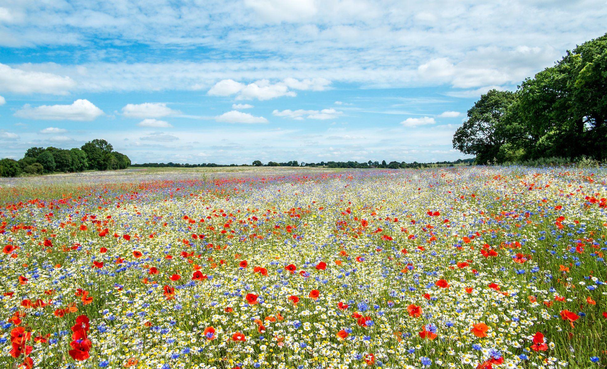 пригласительных билетах фото цветущих полей и лугов ветками