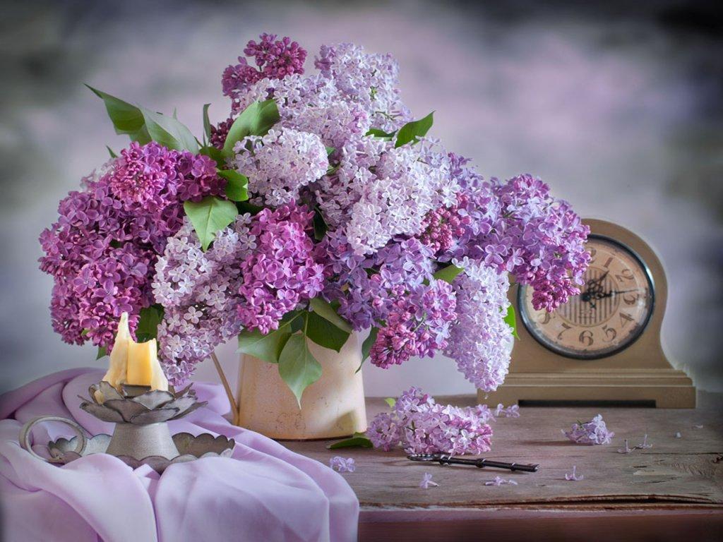 Букет, где в туле купить цветы сирени