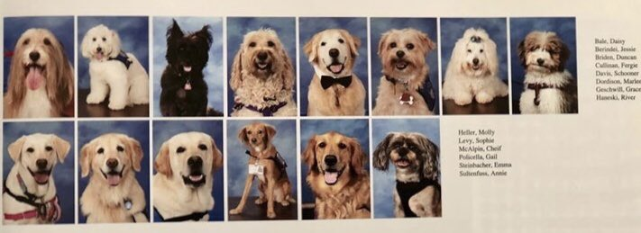 Marjory Stoneman Douglas honors its therapy dogs with yearbook photos