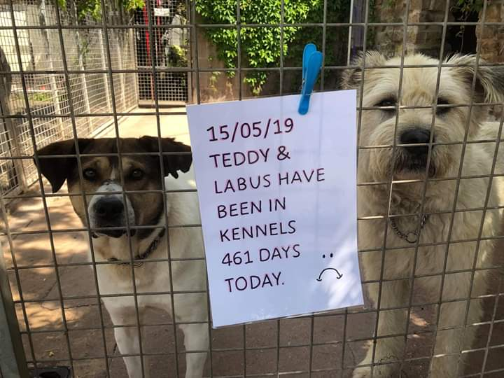 So sad these 2 came in together Labus and Teddy  @hilbrae #shropshire #adoptdontshop <br>http://pic.twitter.com/cCe9MlgWkB