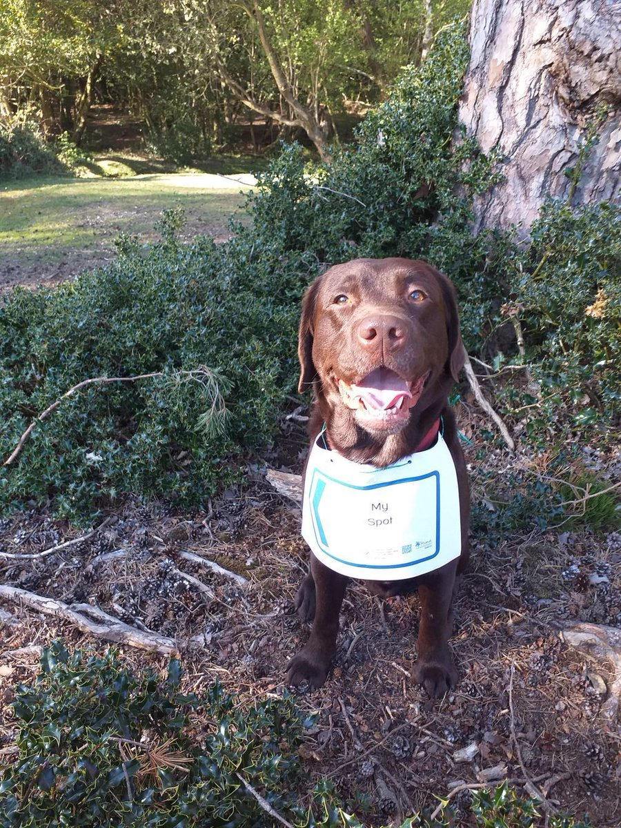Barney's favourite shady tree is keeping him happy in #thenewforest!  Keep sharing your animal themed #onyourdoorstep signs, here: https://buff.ly/2Wy2mrW🐴 🐥 🐶 🐱