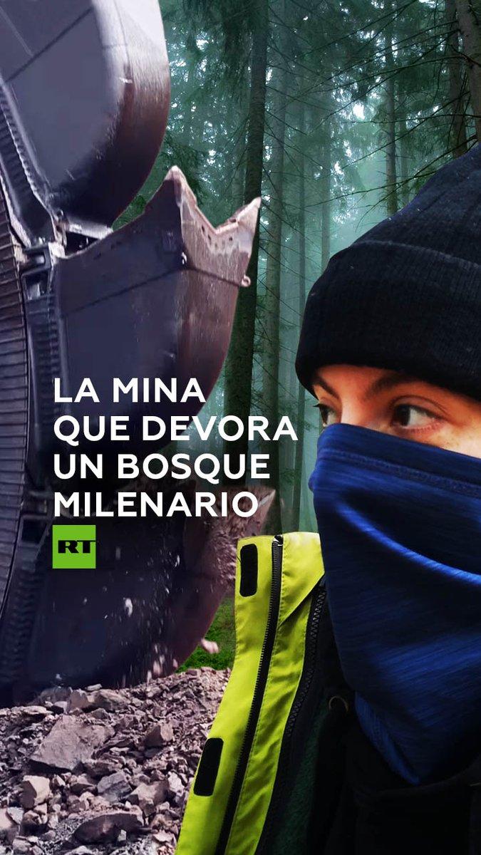 Vivir en los árboles para luchar contra el sistema: activistas del bosque Hambach resisten en casas a 20 metros de altura la represión policial. Quieren evitar que una minera destruya el lugar @juliamdominzain