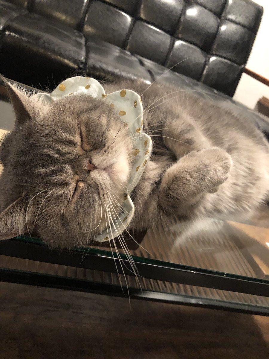 ラッコ…ラッコが寝てる。
