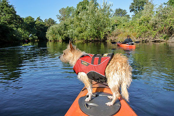 a7ee754860 Wade (and Griffin!) recently reviewed the @ruffwear Float Coat:  https://bit.ly/2vXsBMX Check out it (at #1) and the other top-rated dog  life vests: ...