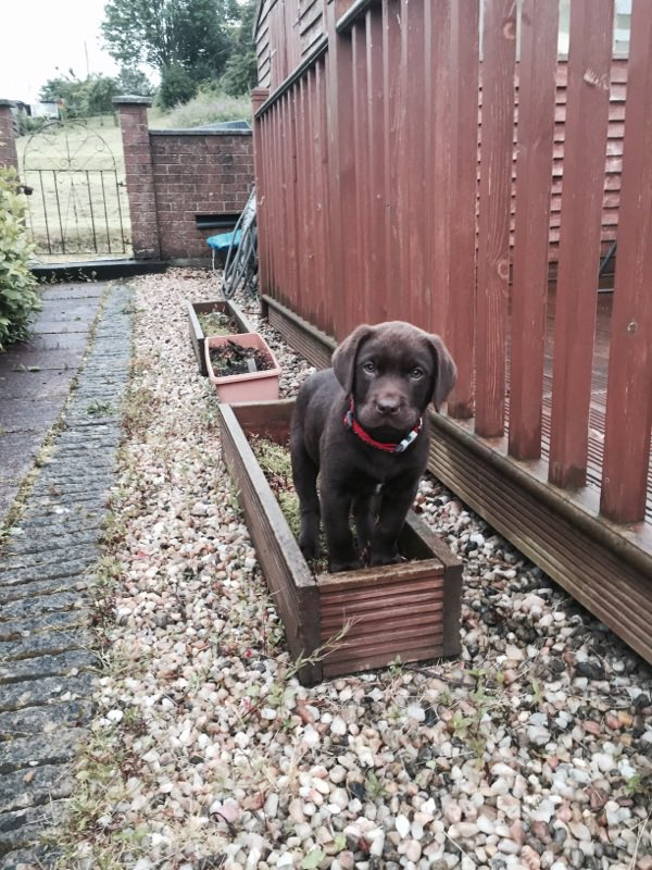 For reference: when I was 3 months old I was approximately 1 plant pot wide