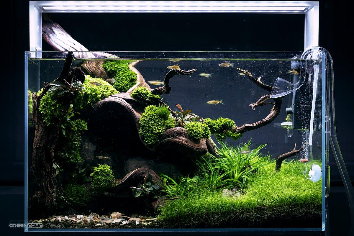 Aquascape Zen
