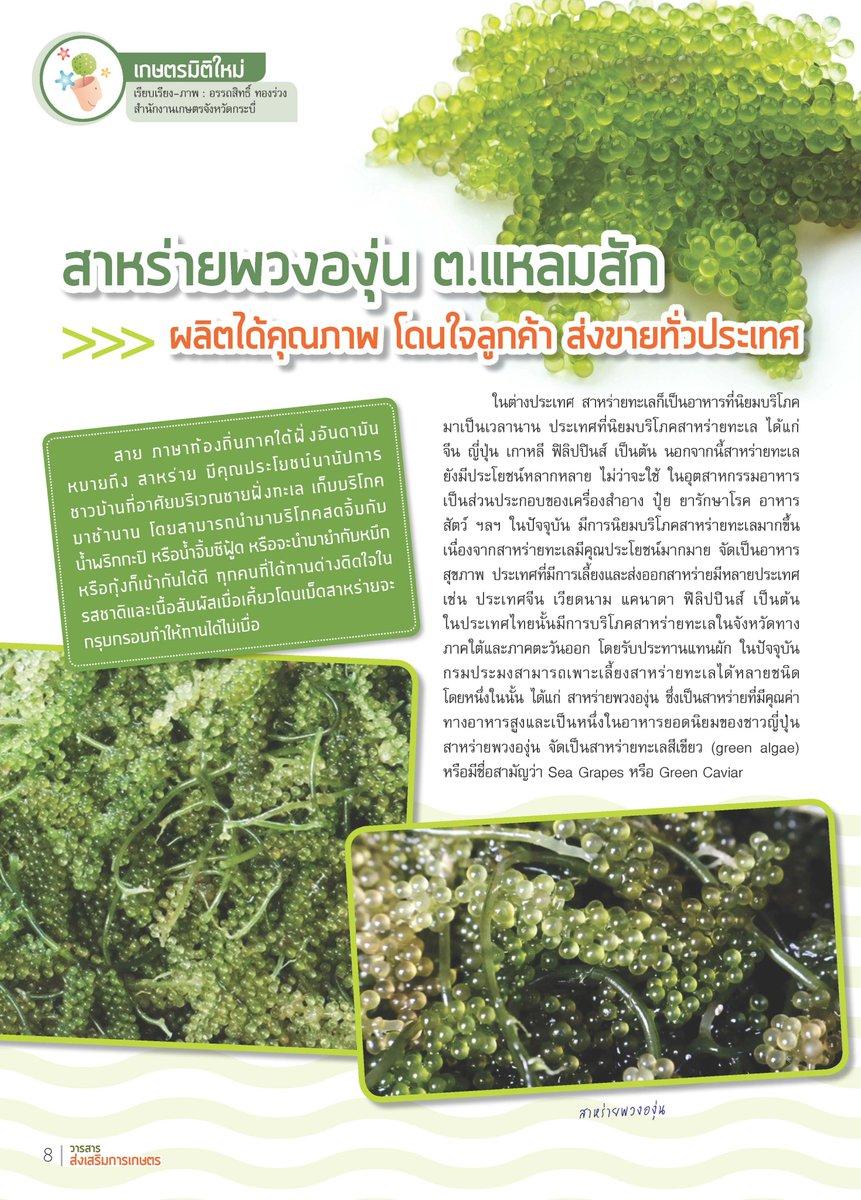 สาหร่ายพวงองุ่น ต.แหลมสัก จ.กระบี่ ผลิตได้คุณภาพ ส่งขายทั่วประเทศ🏖️💚#กรมส่งเสริมการเกษตร #ศูนย์วิทยบริการเพื่อส่งเสริมการเกษตร #สาหร่ายพวงองุ่น #วิสาหกิจชุมชน