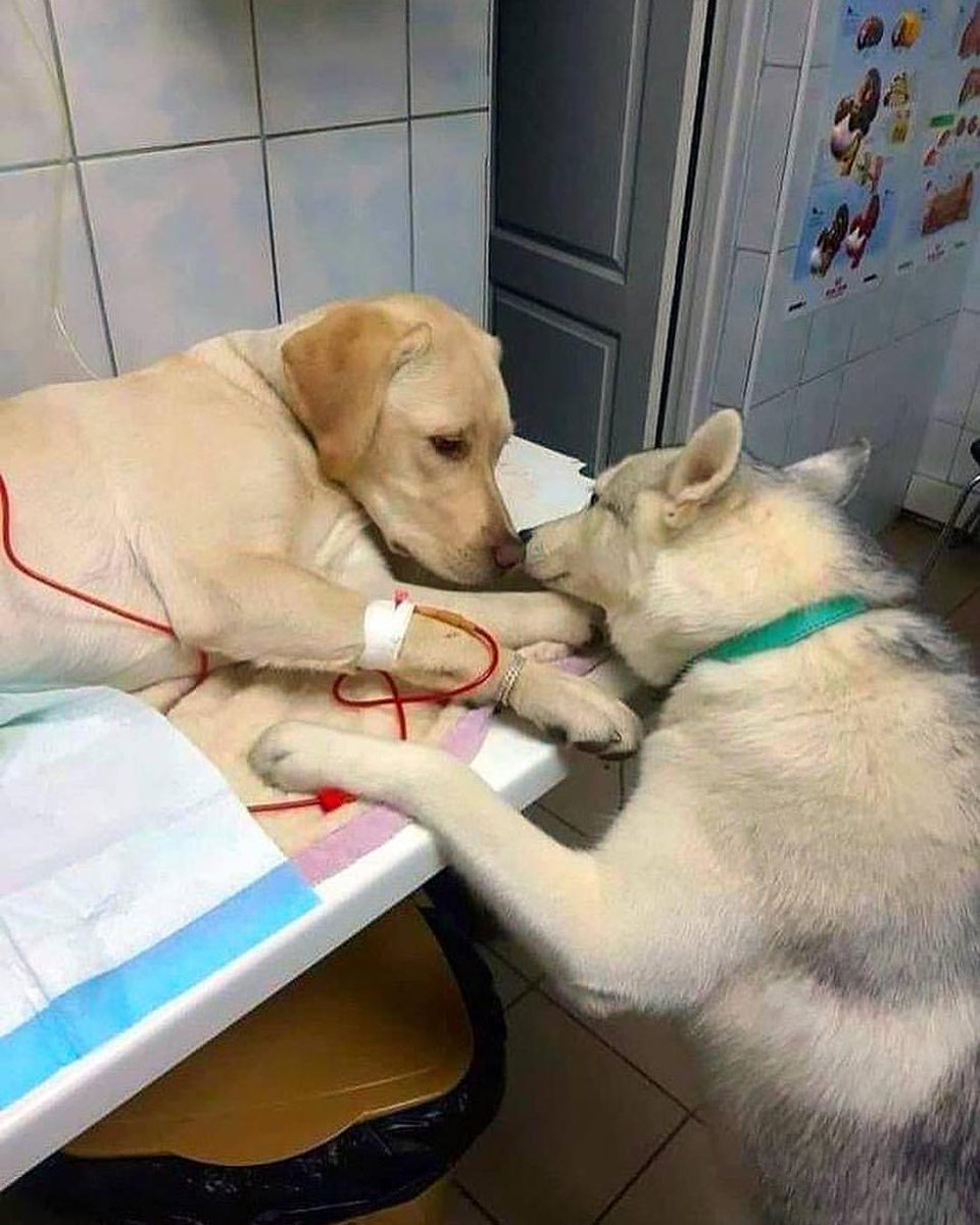 This veterinarian has a comfort dog assistant that helps sick dog patients know that everything will be alright