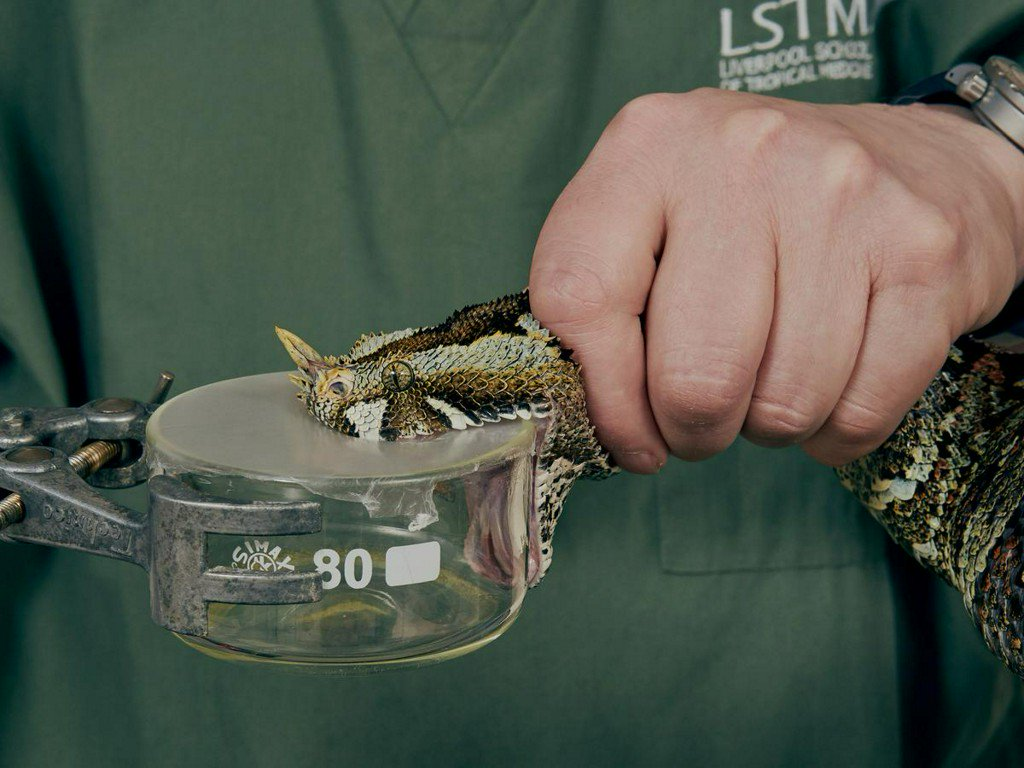 'Hidden health crisis' of snakebites gets $100 million funding injection http://www.reuters.com/article/us-health-snakes-idUSKCN1SL2Y9?utm_campaign=trueAnthem%3A+Trending+Content&utm_content=5cdcb9bde506e70001082ef4&utm_medium=trueAnthem&utm_source=twitter…