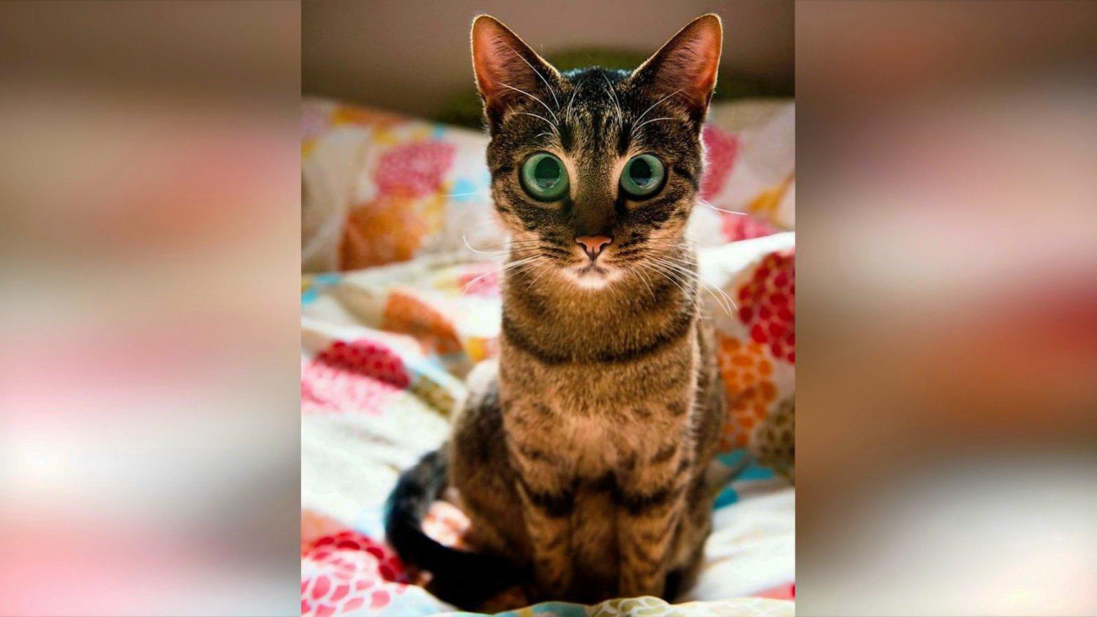 Прикольные картинки про кошек смешное до слез