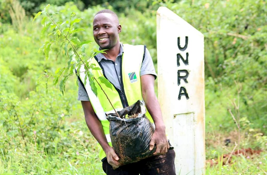 Transplanting of Prunus Africana:  We bring back the useful medicinal trees that are threatened in the wild to our National Roads. Prunus Africana (Entaseesa) is used in the treatment of prostate cancer.   #GreenRightOfWay #UNRAworks<br>http://pic.twitter.com/zlFAcFLyV4