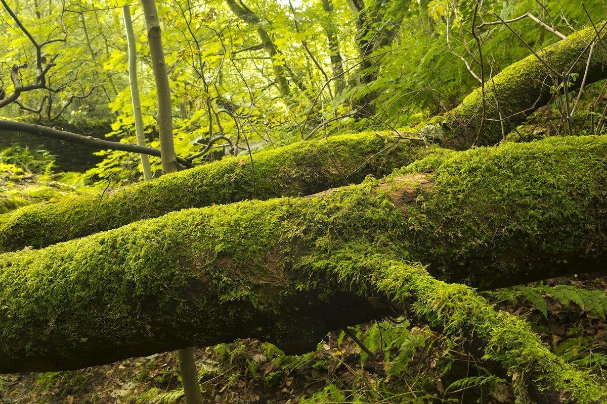 Woodland Trust's photo on #FolkloreThursday