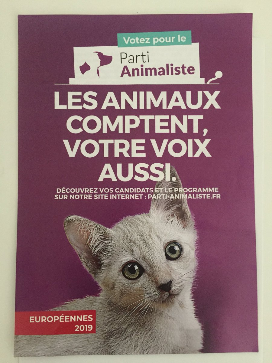 Collège chatte coups