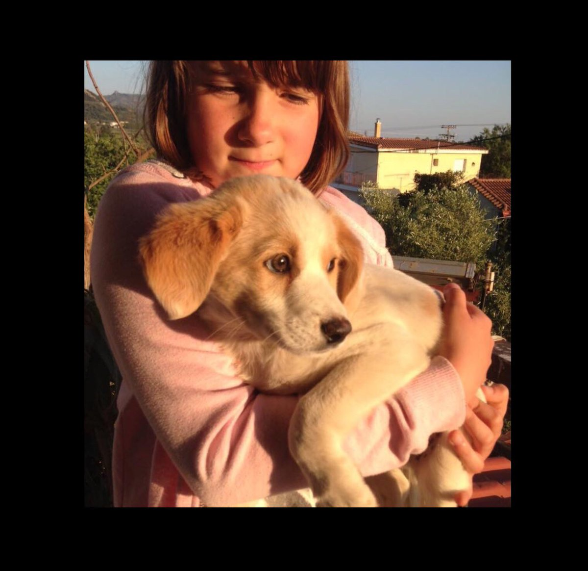 Hit &amp; left by a car, we were #grateful to find sweet Harry in time to help him! See how sad he was at first. He loves dogs, adults &amp; kids-he's even friends with cats. Could you love &amp; care for another #cute family member?  #ADOPT in #UK #Germany #NL  #AdoptDontShop #puppylove <br>http://pic.twitter.com/8XlOhnM9DA