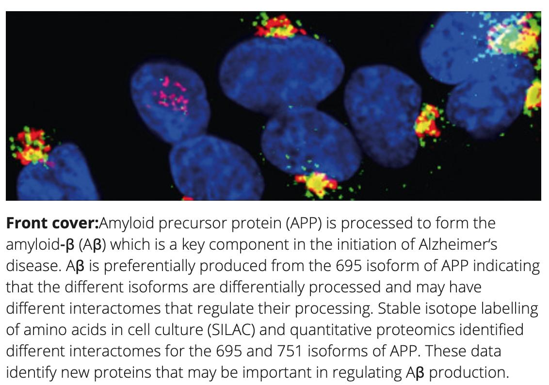 Volume 49 Issue 3 Cover image and article:  Quantitative interaction #proteomics reveals differences in the #interactomes of #amyloid precursor #protein isoforms'   https://onlinelibrary.wiley.com/doi/full/10.1111/jnc.14666…  @HooperLabManc @robjandrew @KateKellett1 @FBMH_UoM @DNEP_UoM @ARUKscientist