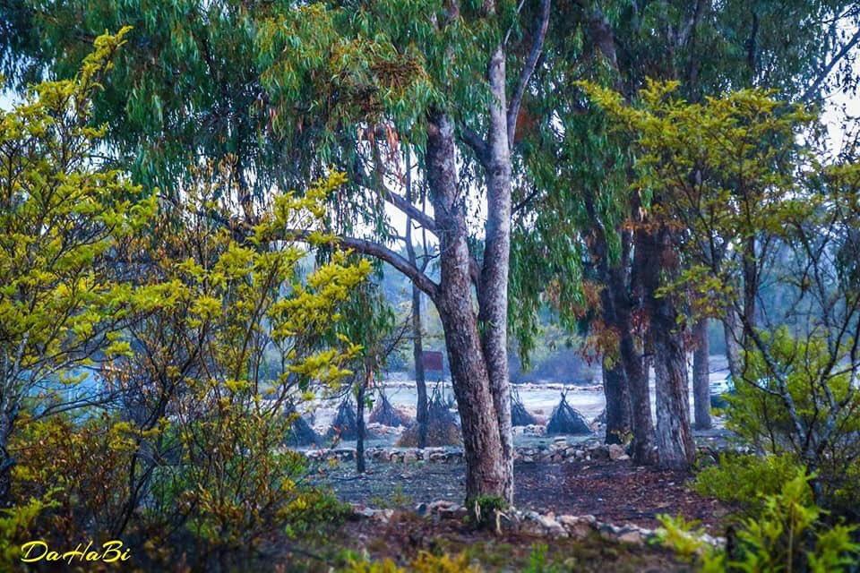غابة دالو الرائعة