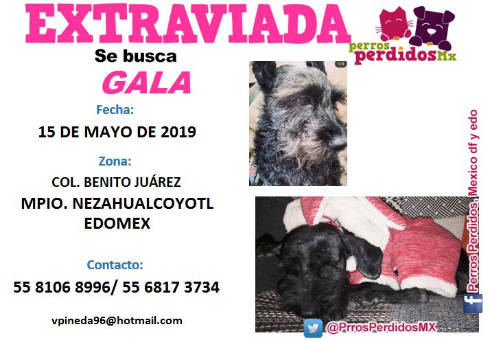#GALA #SCHANAUZER #HEMBRA EL: 15 #MAYO 2019 EN: COL. #BENITOJUÁREZ MPIO. #NEZAHUALCOYOTL #EDOMEX DE: https://www.facebook.com/victoria.pineda.1291… (Auro) (Feed generated with FetchRSS) http://dlvr.it/R4s0m3