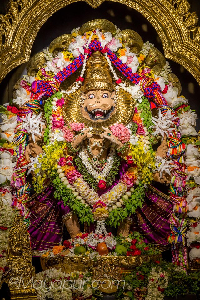 Narasimha Caturdasi Festival begins! Sthanu Narasimhadeva of Mayapur is very dear to devotees as performer of miracles. Today from 9 am, Maha Sudarshana Yajna will take place& Narahari Nama kirtan from 10 am to 10  Watch the festival live at https://t.co/QhdIFnwbuz https://t.co/cSDP3gT9U5
