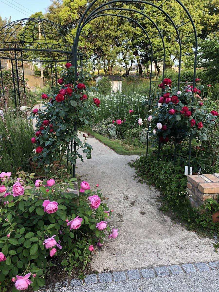 これから、東京戻ります。今晩は、転職前の最初の慰労会。これから6月いっぱいの週末はほぼ送別、慰労会の予定。プライベート、会社関係込みだけどね。来週末の人間ドック迄は肝臓維持と体重減量するミッションもあり、両立が辛い?photo:  #常盤公園   #薔薇園 by   iphone