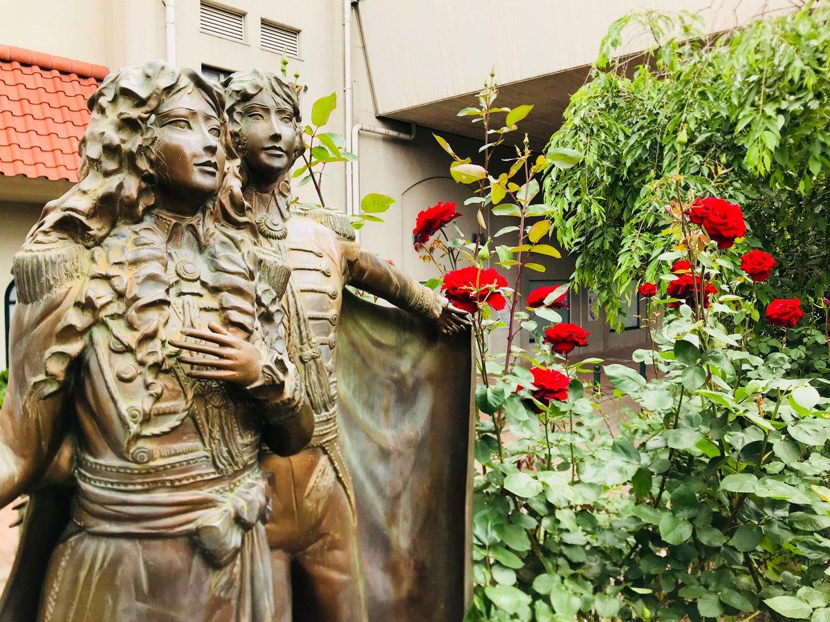 #宝塚 #花のみち の「 #ベルサイユのばら ®︎」が見頃を迎えています😊🌹 情熱の赤、真紅の大輪の花は見ごたえ抜群です💕