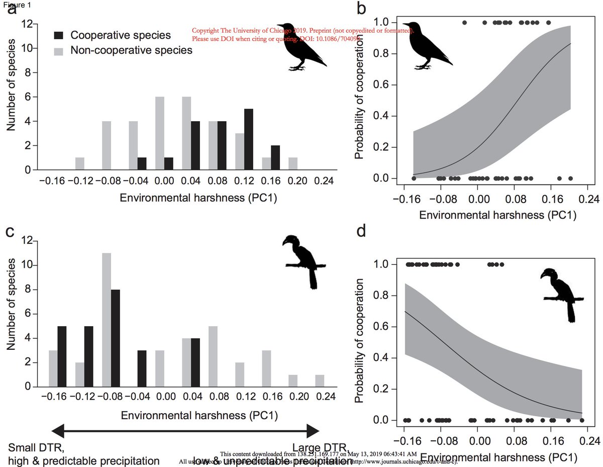 In 45 starlings spp. & 61 hornbills spp., Lin et al. in @ASNAmNat find that unpredictable environments correlate positively with cooperative breeding in starlings but negatively in hornbills, suggesting different roles of social group formation. https://www.journals.uchicago.edu/doi/abs/10.1086/704090…