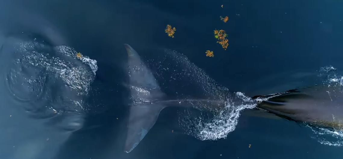 фоторедактор выпрыгивает кит в картинке день