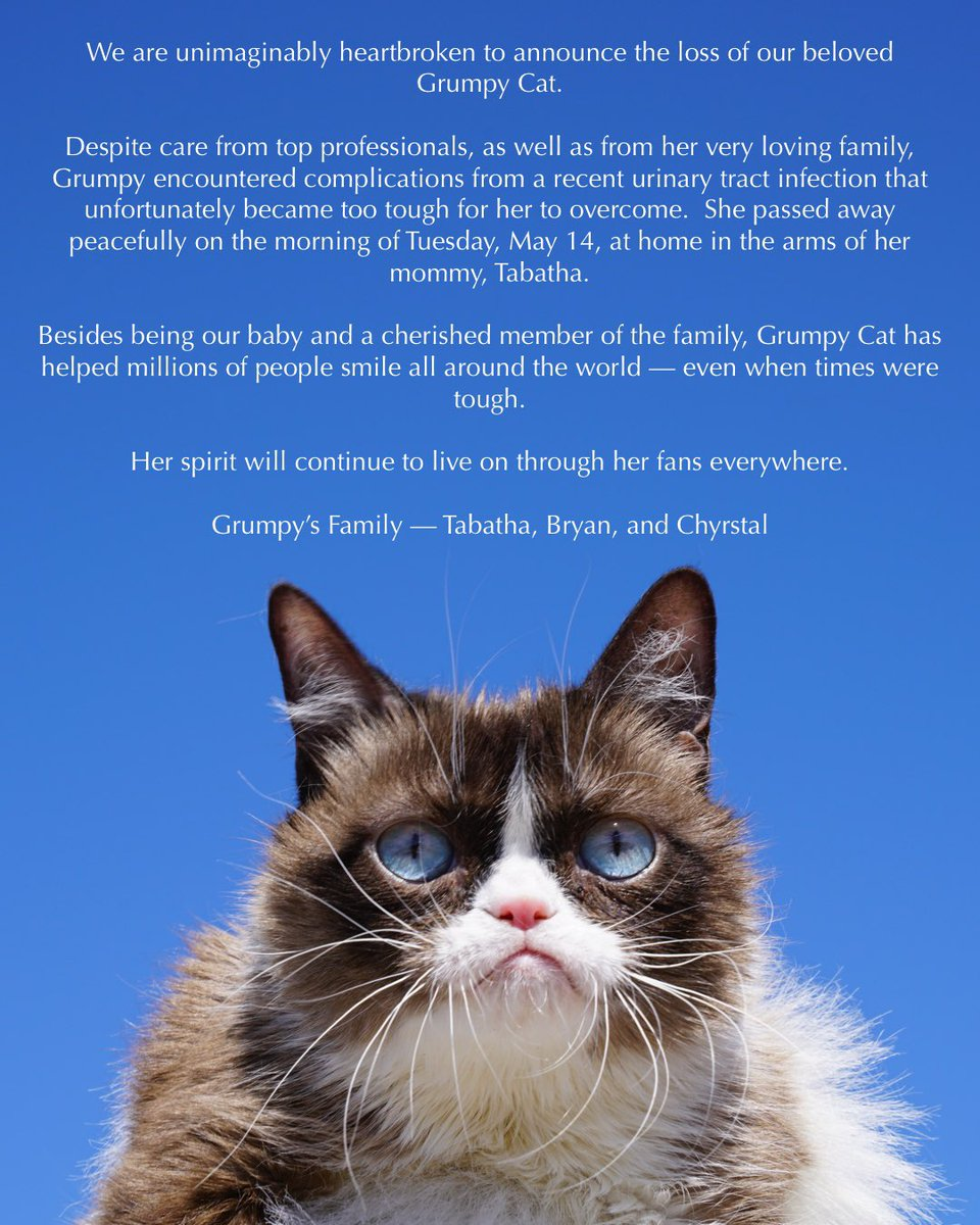 Now this is something to be grumpy about: Meme superstar Grumpy Cat has died